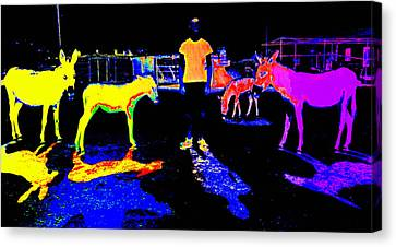 I Am Living In This Dark Donkey Place Opposite The Real World Canvas Print by Hilde Widerberg