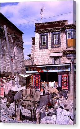 Tibetan Buddhism Canvas Print - Donkeys In Jokhang Bazaar by Anna Lisa Yoder