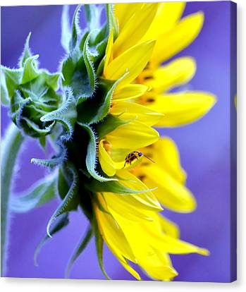 Don't Bug Me Canvas Print by Deena Stoddard
