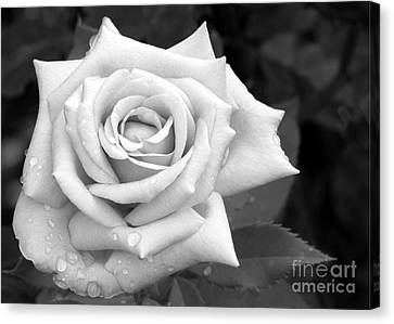 Florida Flowers Canvas Print - Don't Cry by Sabrina L Ryan