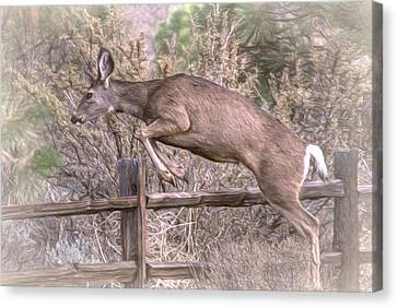 Don't Fence Me In Canvas Print by Donna Kennedy