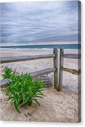 Don't Fence Me In Canvas Print by Mark Miller