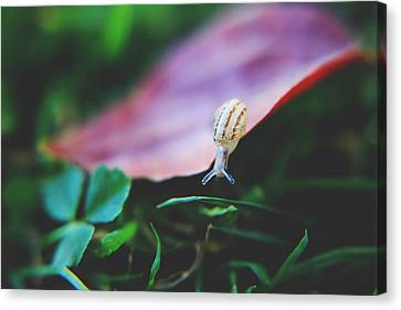 Red Leaf Canvas Print - Don't Stop Reaching by Laurie Search