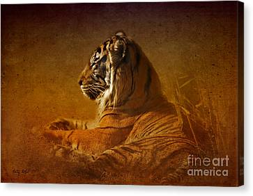 Don't Wake A Sleeping Tiger Canvas Print by Betty LaRue