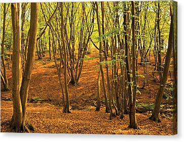 Canvas Print featuring the photograph Donyland Woods by David Davies