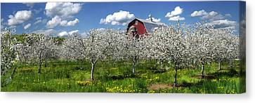Door County Cherry Blossoms Panorama Canvas Print by Christopher Arndt