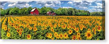 Door County Field Of Sunflowers Panorama Canvas Print