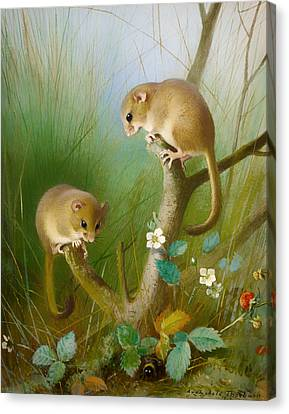 Dormice Canvas Print by Mountain Dreams