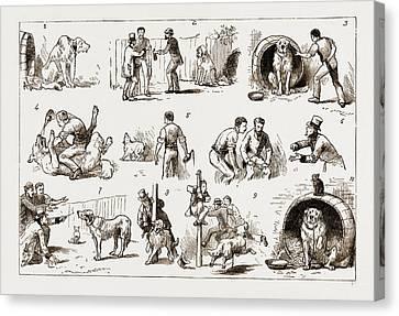 Dosing A Dog, 1883 1. Our St. Bernard Showed Symptoms Canvas Print