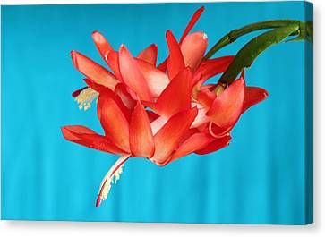 Double Bloom In Red Canvas Print by E Faithe Lester