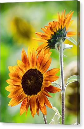 Double Dose Of Sunshine Canvas Print by Jordan Blackstone