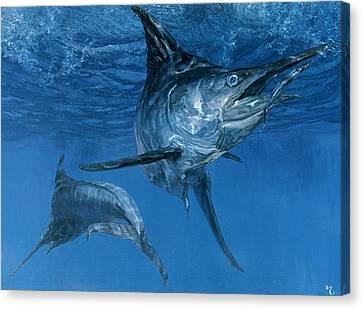 Ballyhoo Canvas Print - Double Header Makaira Nigricans, Blue by Stanley Meltzoff / Silverfish Press
