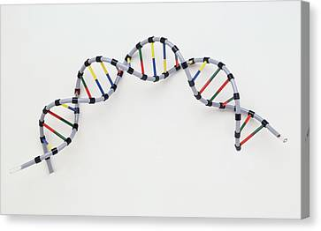 Double Helix Of Human Dna Canvas Print