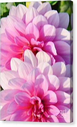 Double Pink Canvas Print by Kathleen Struckle