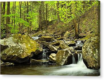 Double Run #2 - Worlds End State Park Canvas Print