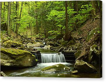 Double Run #1 - Worlds End State Park Canvas Print