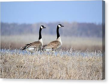 Double Vision Canvas Print by Bonfire Photography