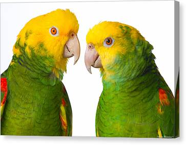 Canvas Print featuring the photograph Double Yellow-headed Amazon Pair Portrait by Avian Resources