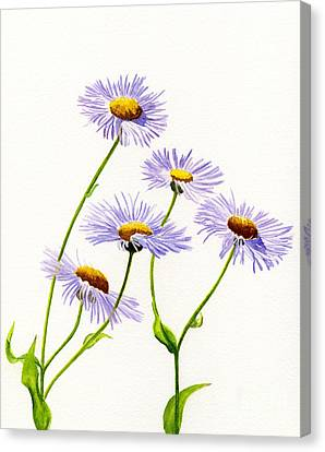 Douglas Aster Wild Flower Canvas Print by Sharon Freeman
