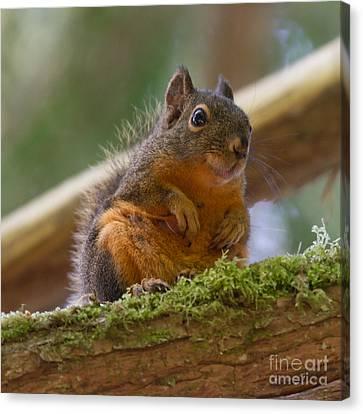 Douglas Squirrel Canvas Print by Paul Rebmann