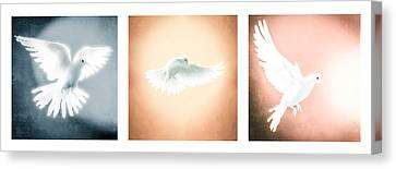 Dove In Flight Triptych Canvas Print by YoPedro