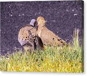 Doves Kisses Canvas Print by Zina Stromberg