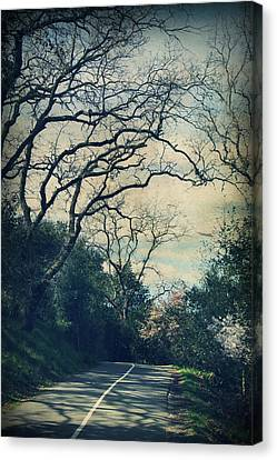Down That Path Canvas Print by Laurie Search