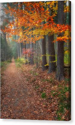 Down The Trail Canvas Print by Bill Wakeley