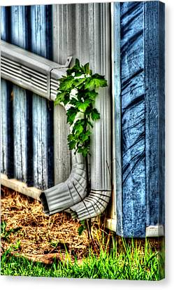 Downspout Canvas Print by Doc Braham