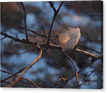 Downy Feather Backlit On Wintry Branch At Twilight Canvas Print by Anna Lisa Yoder