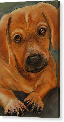 Doxie Canvas Print by Jean Cormier