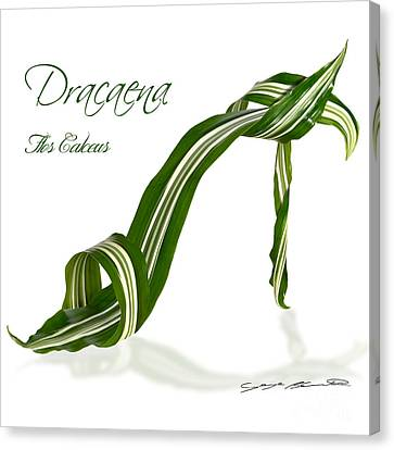 Dracaena Flos Calceus Canvas Print by Blanchette Photography