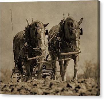 Plow Horse Canvas Print - Draft Horses by Dan Sproul