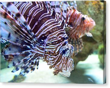 Dragonfish In Tandem Canvas Print by Sandi OReilly