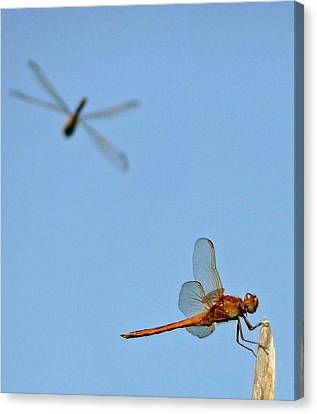 Canvas Print featuring the photograph Dragonflies by Jim Whalen
