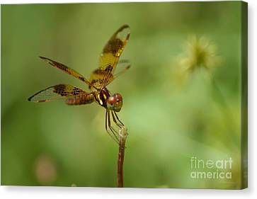 Canvas Print featuring the photograph Dragonfly 2 by Olga Hamilton