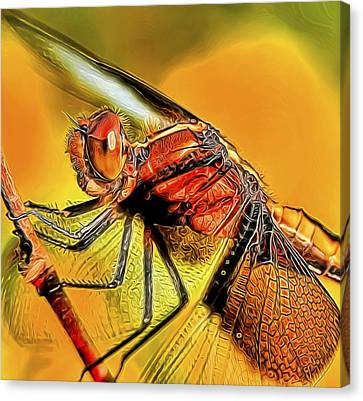 Dragonfly 2 Canvas Print by William Horden