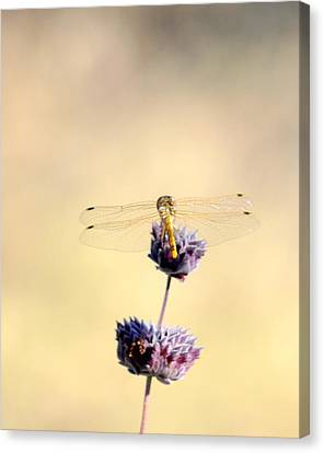 Canvas Print featuring the photograph Dragonfly by AJ  Schibig