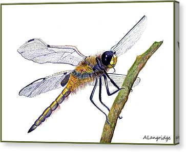 Hairy Dragonfly Of England Canvas Print by Alison Langridge