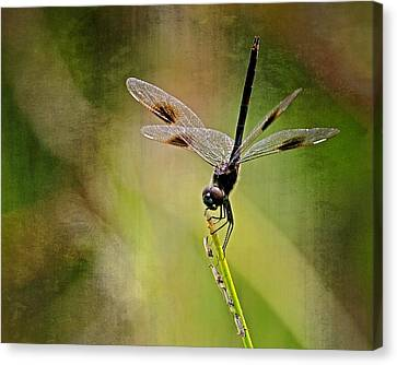 Canvas Print featuring the photograph Dragonfly And Friends by Dawn Currie