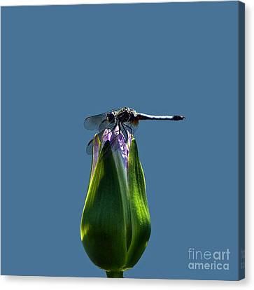 Dragonfly Appreciates A Flower Canvas Print by Byron Varvarigos