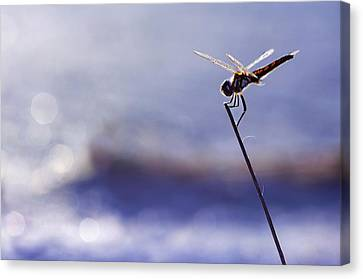 Dragonfly Blue Canvas Print by Laura Fasulo