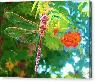 Dragonfly Canvas Print by Cathy Long