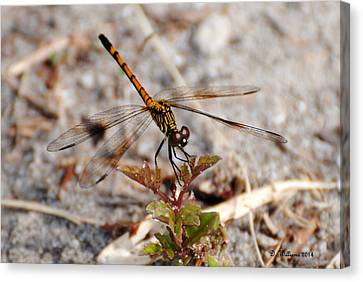 Dragonfly Canvas Print by Dan Williams
