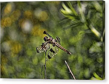 Canvas Print featuring the photograph Dragonfly by Daniel Sheldon