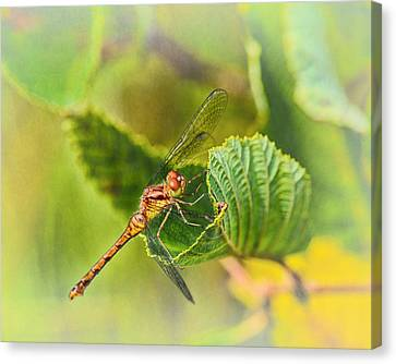 Dragonfly Days II Canvas Print by Susan Capuano