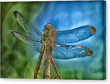 Canvas Print featuring the photograph Dragonfly by Dennis Baswell