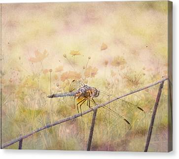 Dragonfly Dreams Canvas Print by Judy Hall-Folde