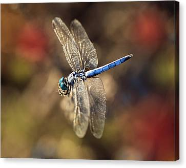 Dragonfly Floating Canvas Print