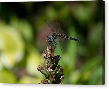 Canvas Print featuring the photograph Dragonfly by Greg Graham